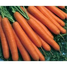 cenoura melissa inverno hibrida top seed