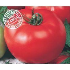 tomate caqui hibrido serato f1 topseed