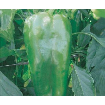 semente pimentao hibrido verde arcade topseed