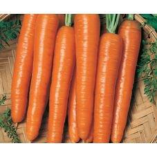 semente cenoura verao hibrida bruna f1 topseed