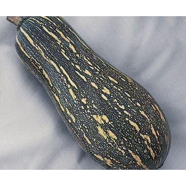 semente abobora mini paulista topseed