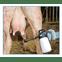 teaty matabi profissional mastite tetos vaca leite iodo aplicacao