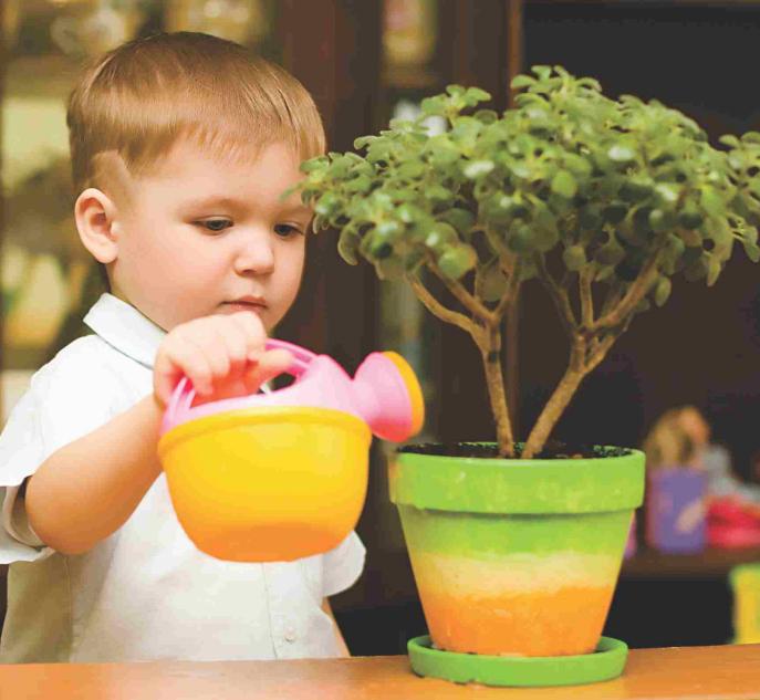 fertilizante liquido bonsai fort crianca muda planta