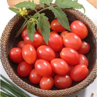 semente de tomate carolina