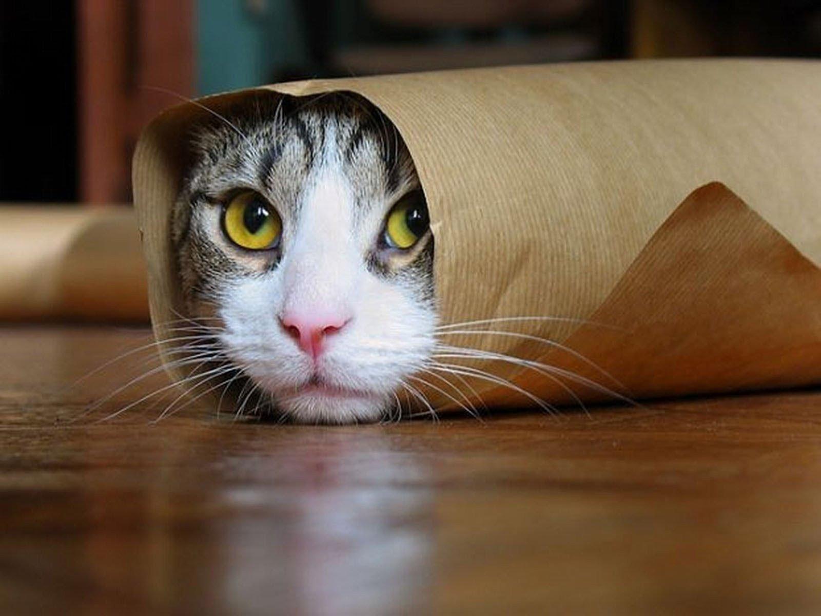 neutralizador odor gatos citromax