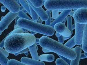 ralo limpo citromax bacterias