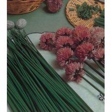 semente cebolinha fina verde feltrin