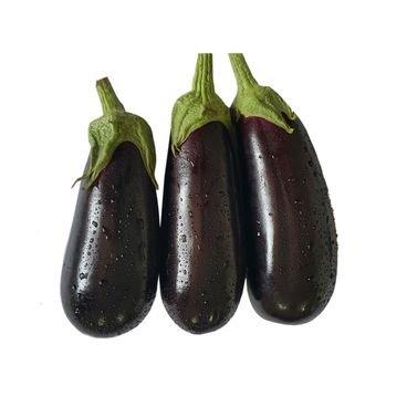 semente beringela classic feltrin
