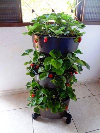 horta compacta vertical verde vida marrom com rodizio