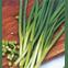 semente cebolinha verde todo ano tecnoseed