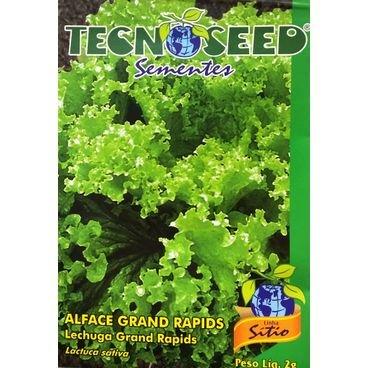 semente alface crespa grand rapids tecnoseed