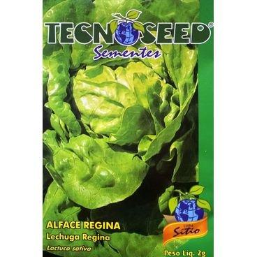 semente alface regina lisa tecnoseed