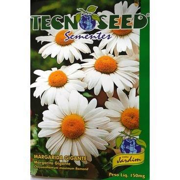 semente flor margarida gigante tecnoseed