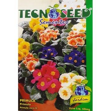 semente flor primula tecnoseed