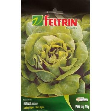 semente alface regina feltrin