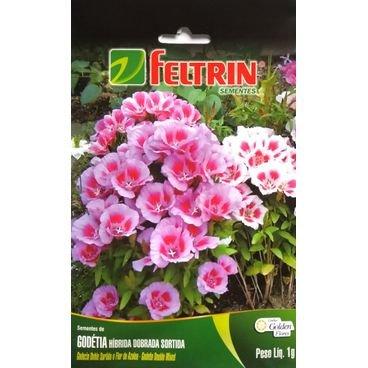 semente flor godetia hibrida dobrada sortida feltrin