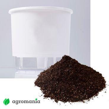 vaso autoirrigavel raiz branco substrato