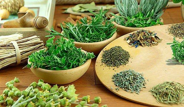 ervas cultivadas em vasos