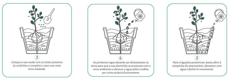 vaso autorrigavel sistema de irrigacao como funciona 7 agromania
