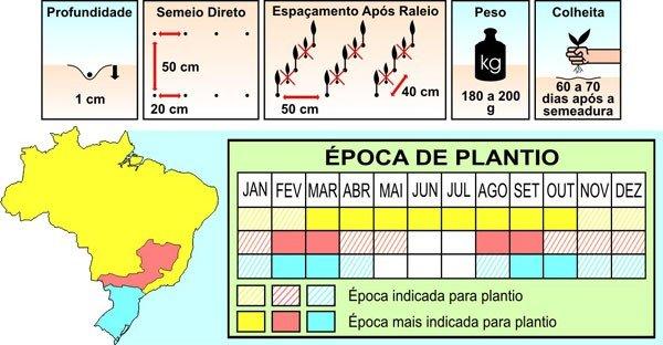 plantio pepino aodai topseed