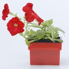 vaso autoirrigavel retangular vermelho