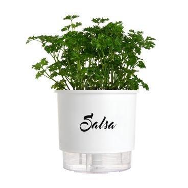 vaso autoirrigavel branco salsa