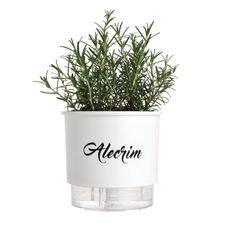 vaso autoirrigavel branco alecrim