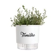 vaso autoirrigavel branco tomilho