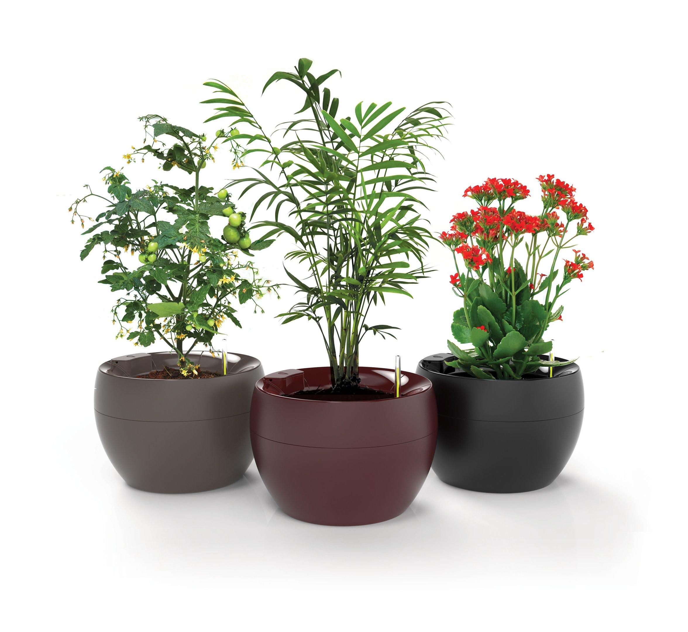 vaso botanika trio