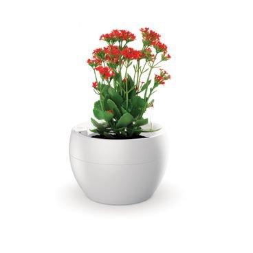 vaso botanika branco flor