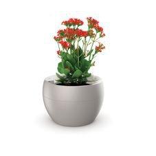 vaso botanika areia flor