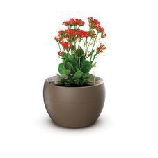 vaso botanika marrom flor