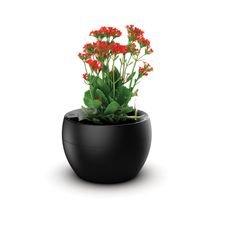 vaso botanika preto flor