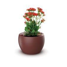 vaso botanika vermelho flor