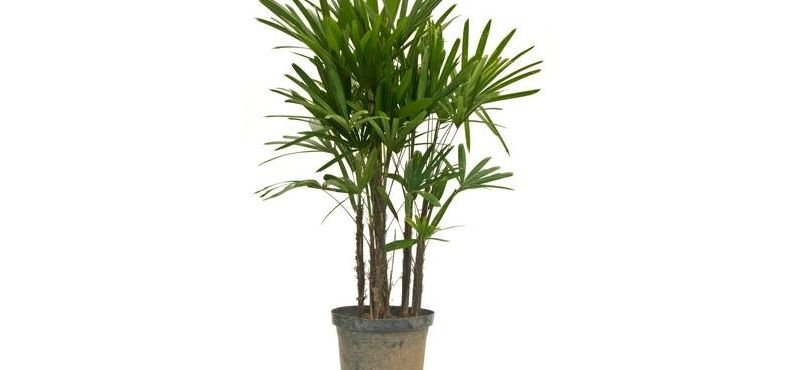 Algumas Plantas Ornamentais para Ter em Casa