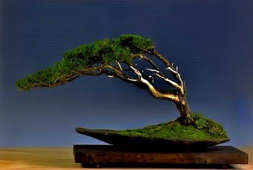 bonsai diferente