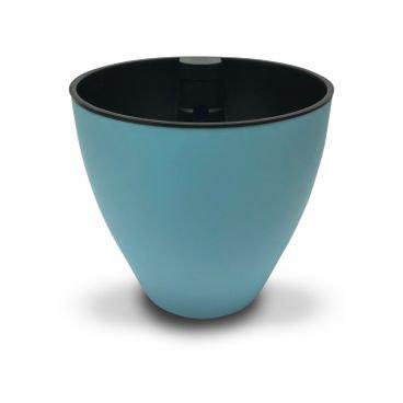 plantie azul turq