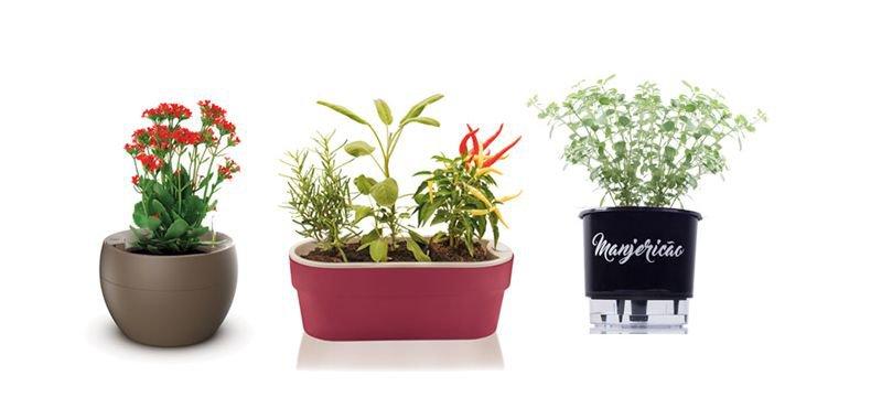 Como cultivar em um vaso autoirrigável