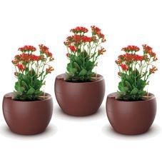 kit botanika vermelho