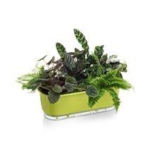 jardineira autoirrigavel raiz verde claro plantas