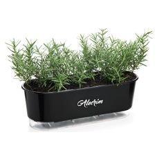 jardineira autoirrigavel raiz preto alecrim plantas