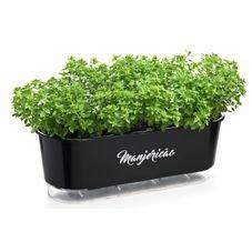 jardineira autoirrigavel raiz preto manjericao plantas