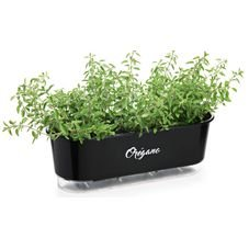 jardineira autoirrigavel raiz preto oregano plantas