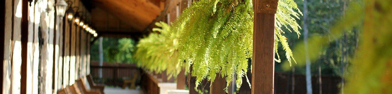 planta para ter em casa samambaia