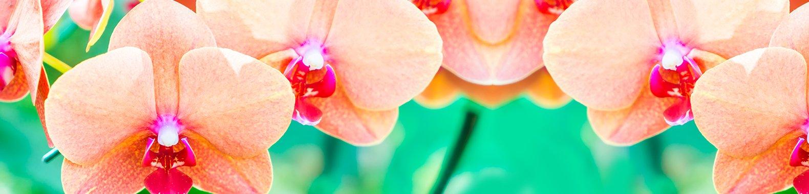 planta para ter em casa orquidea