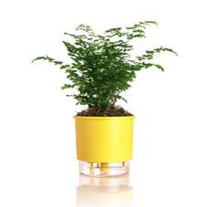 vaso autoirrigavel amarelo raiz