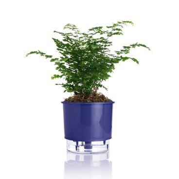 vaso autoirrigavel azul raiz