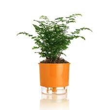 vaso autoirrigavel laranja raiz