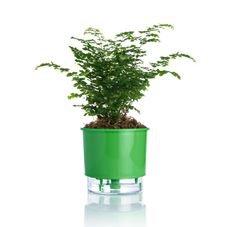 vaso autoirrigavel verde escuro raiz