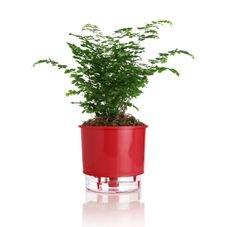vaso autoirrigavel vermelho raiz